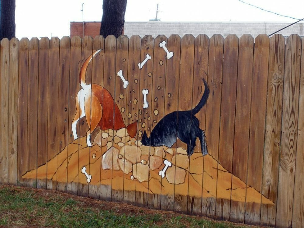 digging dogs how to stop