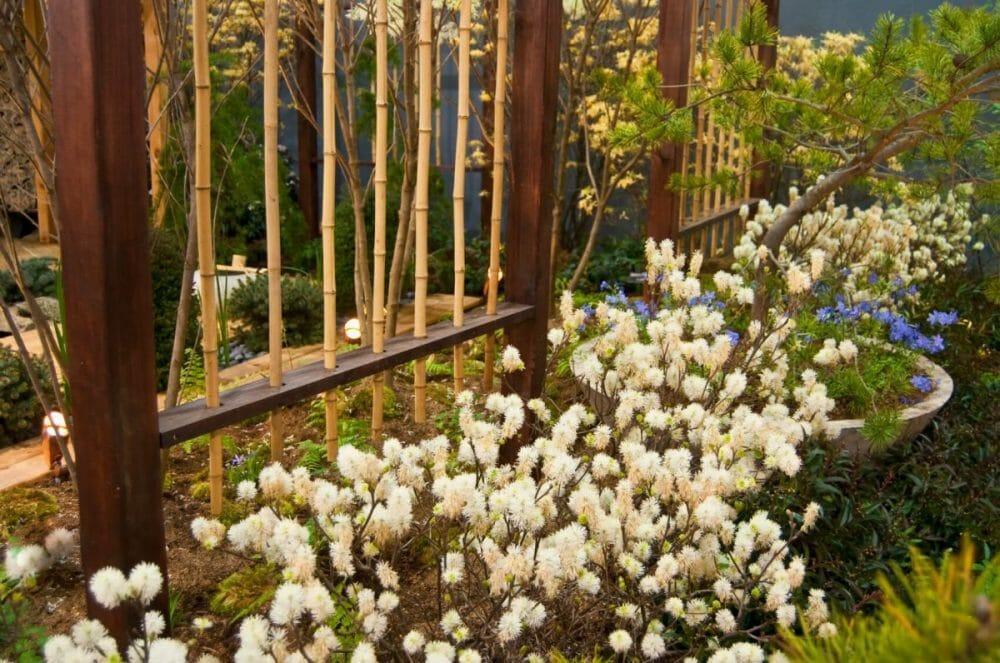 bamboo fence restoration