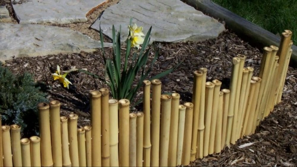 bamboo fence care