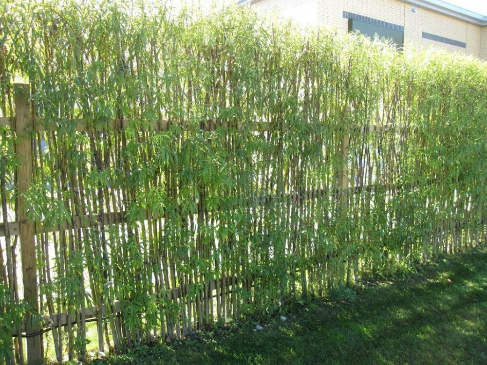 bamboo fence panels lowes