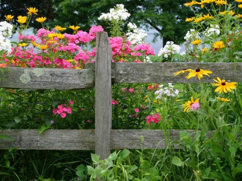 Perennials for Summer