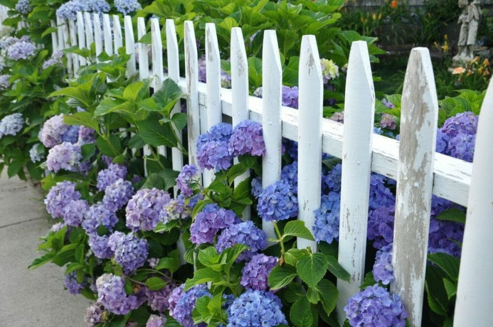 Wooden White Picket Fence