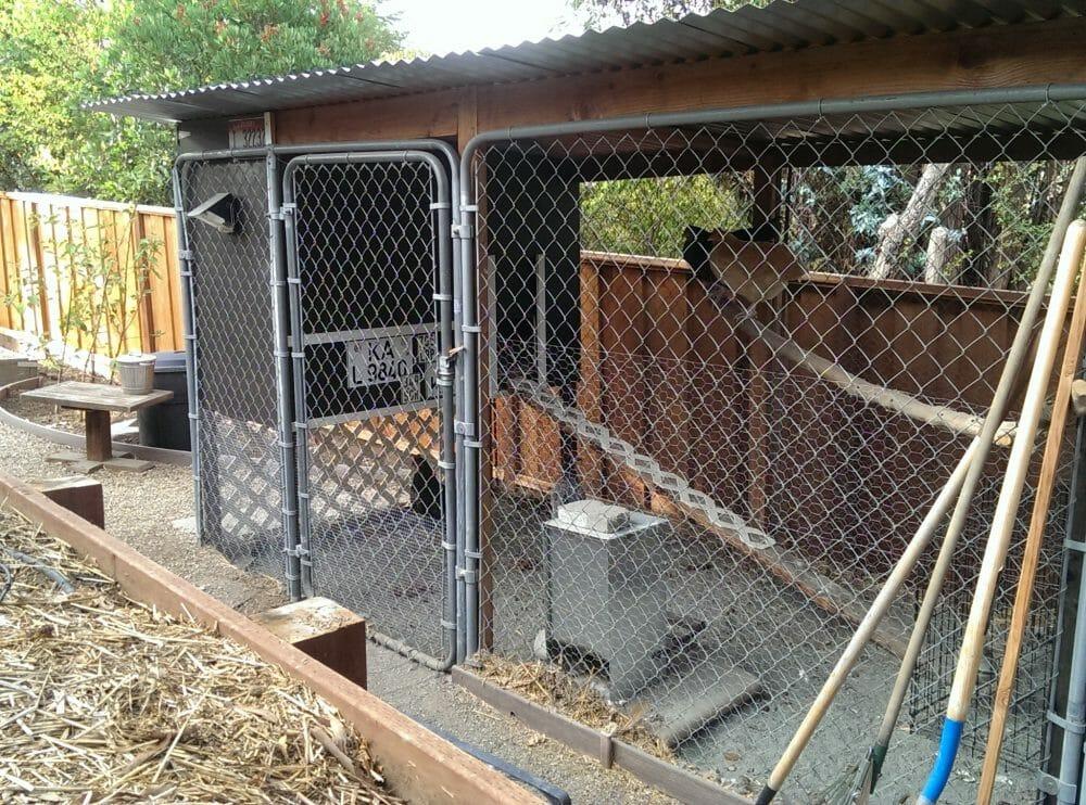 Chain Link Chicken Fence Ideas